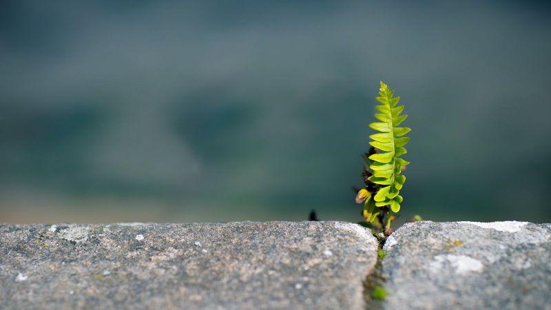 Eine kleine grüne Pflanze wächst aus einer Steinritze hervor