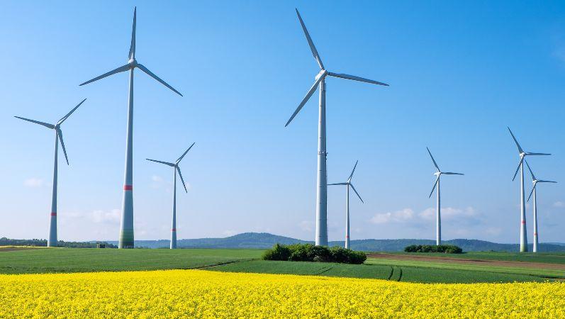 Windräder auf einem Feld vor blauem Himmel, im Vordergrund gelbe Blüten